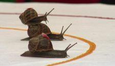 02.20 snails