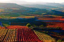 Agencia de traducciones La Rioja